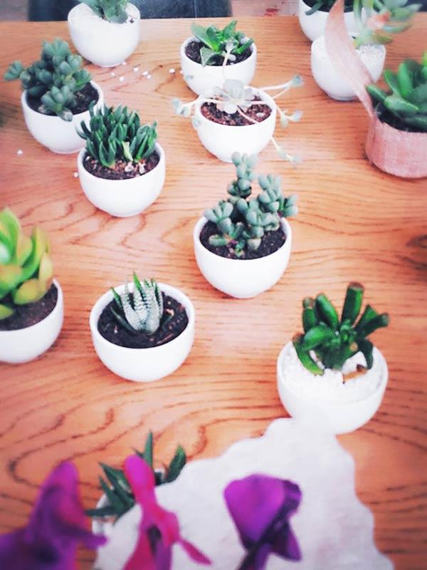 可愛らしい観葉植物