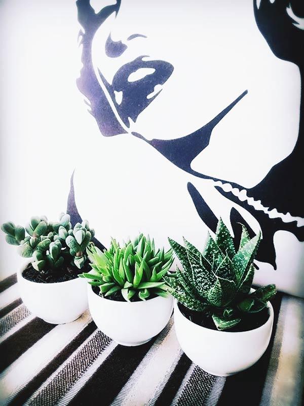 それぞれ違う特徴をもった観葉植物