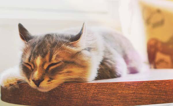 猫の暑さ対策・大切な家族を守るために飼い主が出来ること