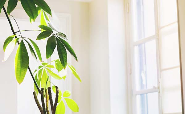 部屋の湿度を下げる方法・夏をカラッと快適に過ごすコツ