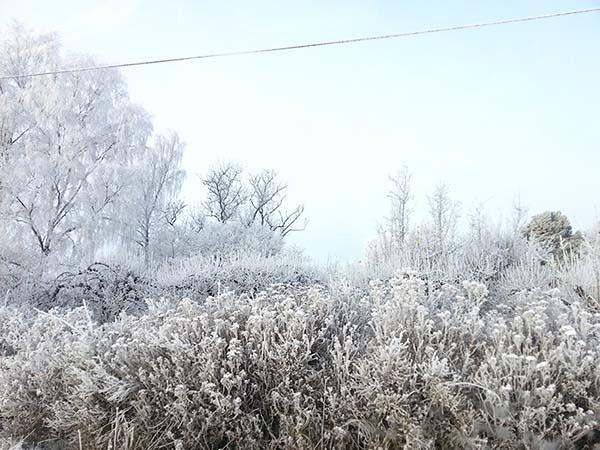 木が雪で凍ってます