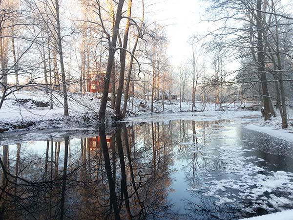 裏にある湖が凍ってます