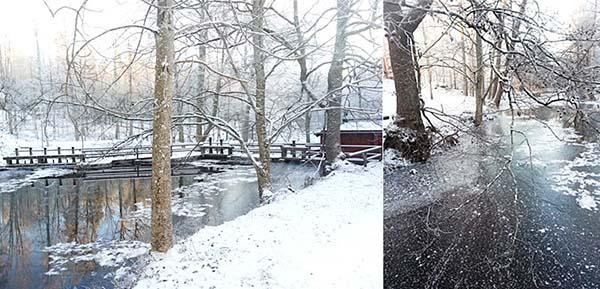 雪で真っ白になった森の風景が幻想的です