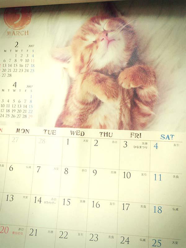 ヤッパリ猫はカワイイ!
