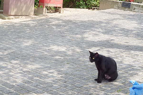 黒猫発見!