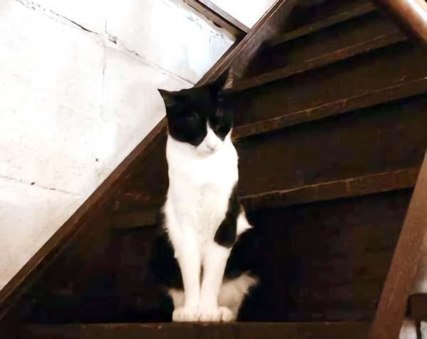 白と黒のネコ