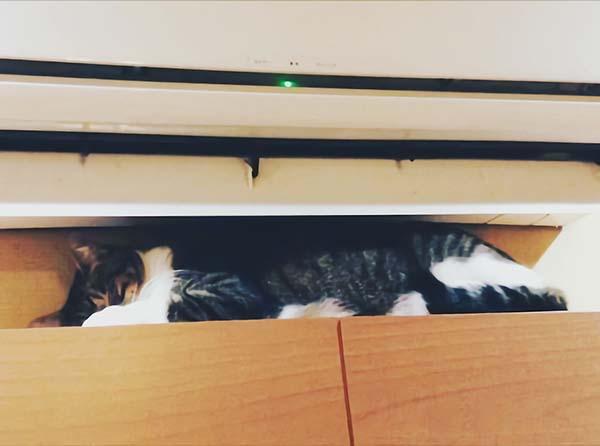 エアコンの下で眠る猫
