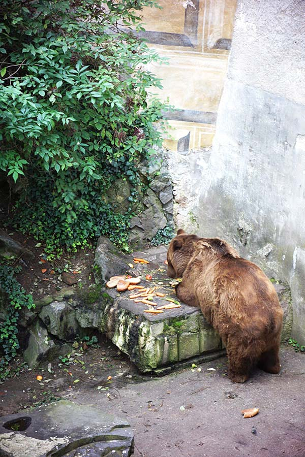 熊がいました!