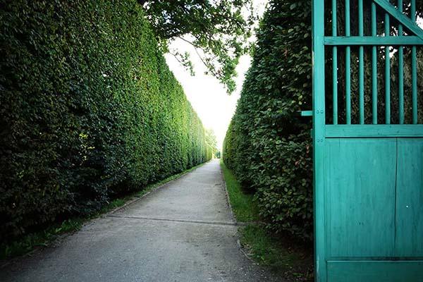 延々と続く緑が美しい