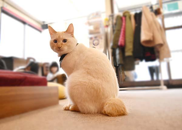 猫がかわいい