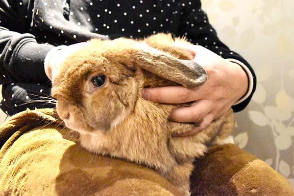 ウサギのアップ