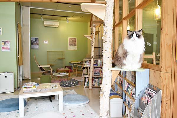 札幌の猫カフェ「きたねこ家」