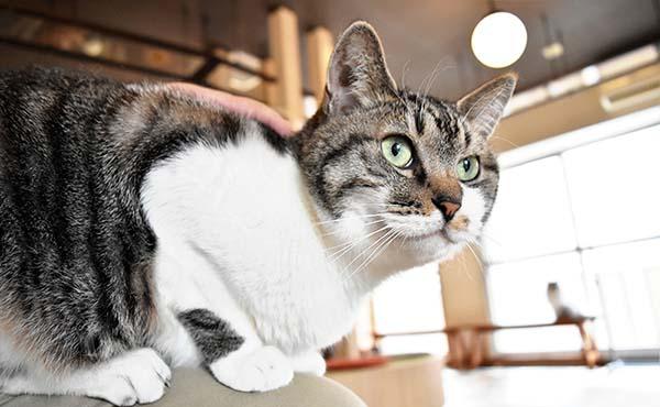 札幌猫カフェ・身も心もほっこりできる店まとめ