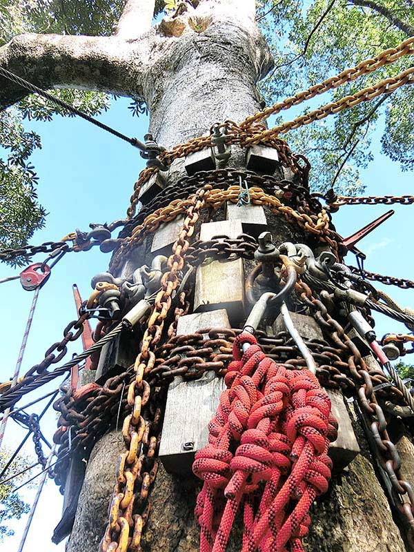 そしてロープと鎖をまとった大木