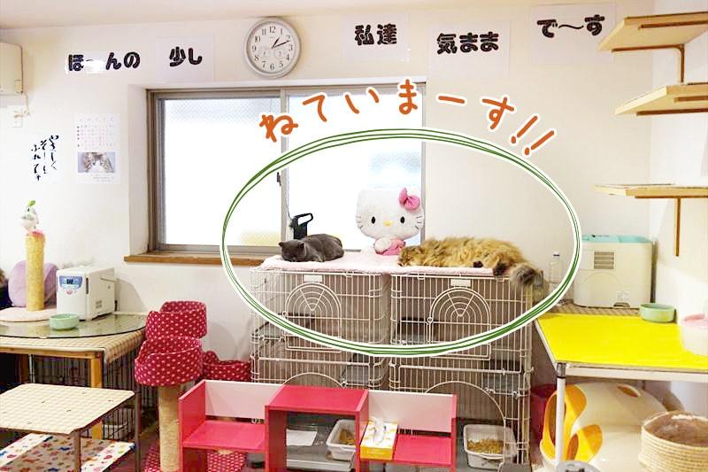 ゲージの上で寝ている猫