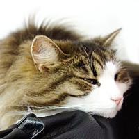 猫カフェ神奈川・もふもふのネコたちがお迎えする癒し空間