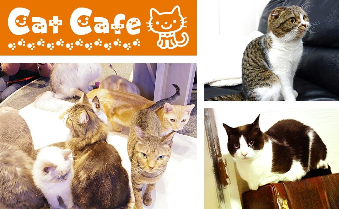 猫カフェ特集