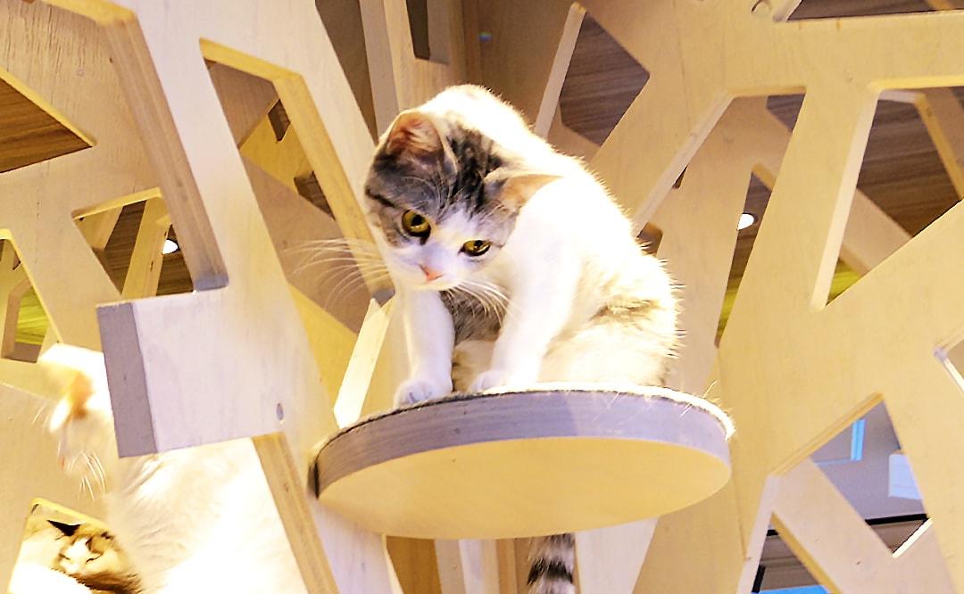 猫カフェモカ渋谷店・幸せな時間を過ごしてきた