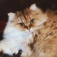 大阪猫カフェ・個性豊かなネコたちと触れ合えるお店