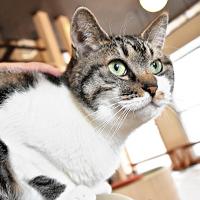 札幌猫カフェ・寒い北海道で心も身体も温めてくれる場所
