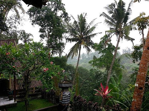 バリ島のジャングル