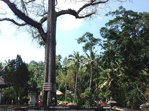 バリ島のジャングル その2