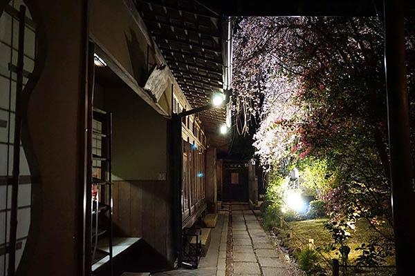 夜のしだれ桜