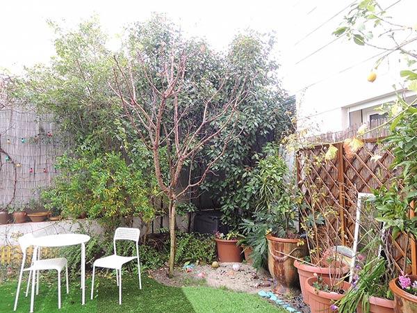 緑が豊富な庭