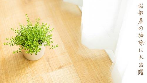 部屋の中の観葉植物