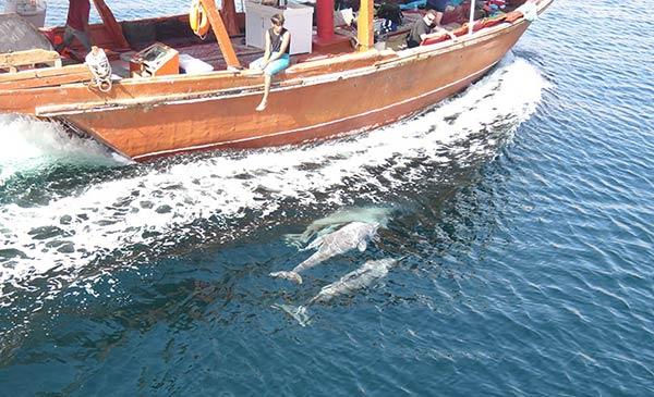 ダウ船から見るイルカ