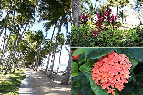 パームコーブビーチのヤシの木とカラフルな花