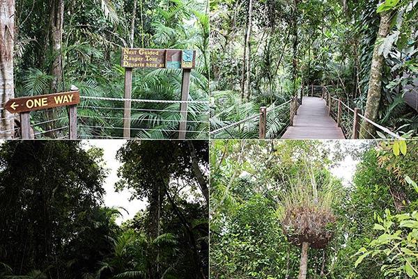 レッドピーク駅周辺の熱帯雨林