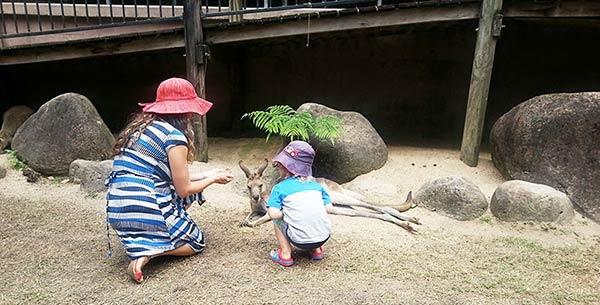 カンガルーを見る親子
