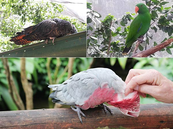 バードパークの鳥