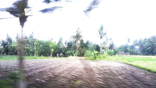 バスから見るヤシの木の風景