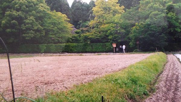 落柿舎の周囲にある田畑