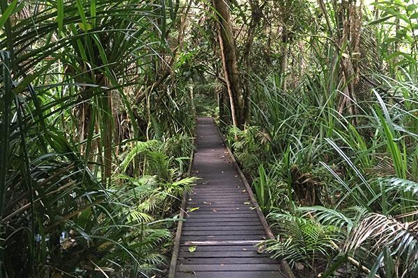 熱帯雨林の中を歩ける道