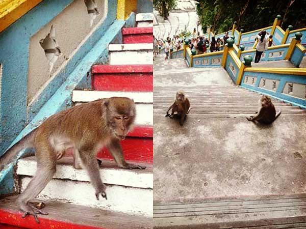 階段を登る猿