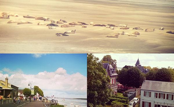 どんどん沈むフランス北部の砂浜で200頭のアザラシをみる旅