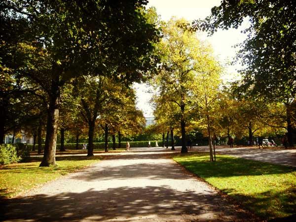 夏のドイツで涼んだ木陰