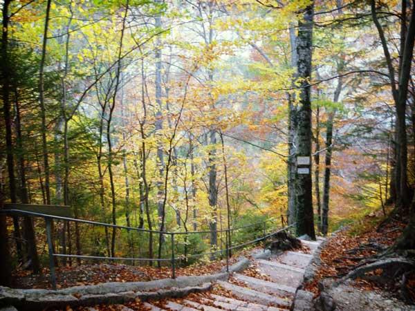 秋に観たドイツの山道