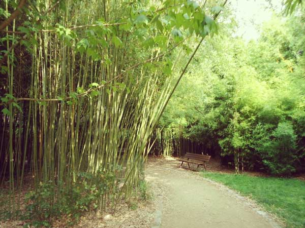 日本の風情を感じる竹林