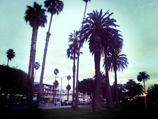 サンタモニカのヤシの木