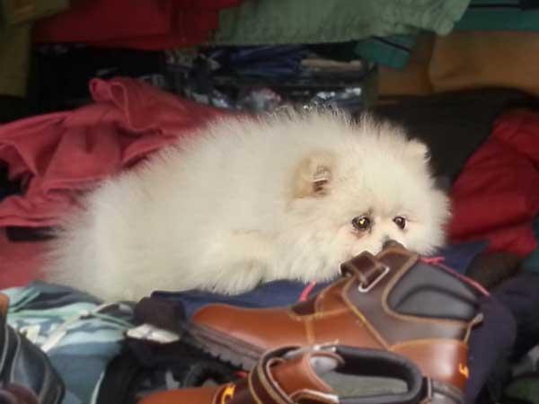 チャガルチ市場で発見した可愛らしい眠そうな看板犬