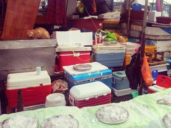チャガルチ市場の魚屋の看板猫