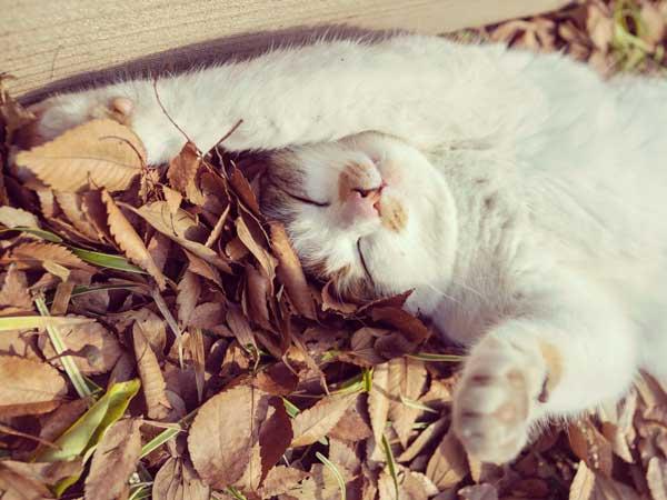 だらしなく寝ている猫