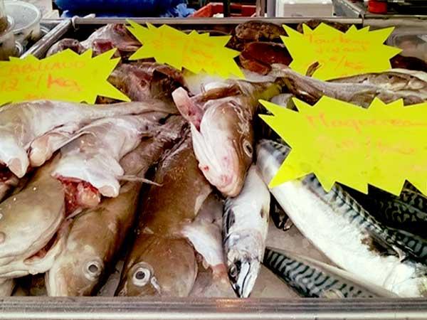 鯖など新鮮な魚介が並ぶディエップの魚市