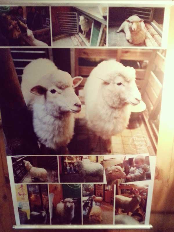 羊カフェ店内に飾ってあった可愛い羊のパネル