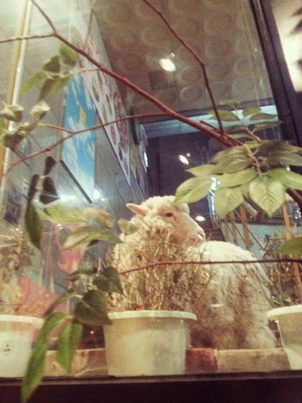 韓国弘大の羊カフェで店内の植物を食べている羊