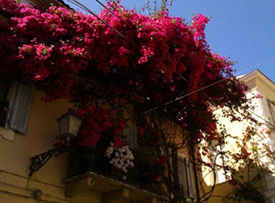街並みや窓辺を美しく彩る夏の花ブーゲンビリア